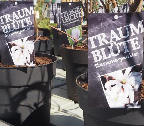 Die neuen Etiketten für Outdoor-Pflanzen stellen den jeweiligen Hauptnutzen einer Pflanzen heraus.