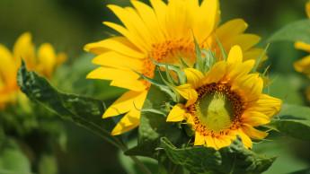Sommer-Deko für Garten, Terrasse und Balkon