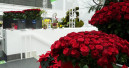 Mit Rosen  im Herzen
