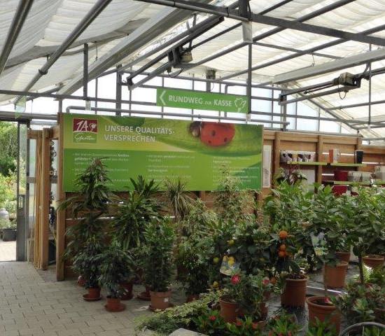 1A Garten Strauß