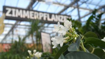 Markt für Blumen und Pflanzen erreicht Rekordvolumen