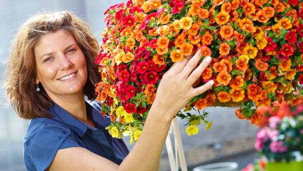 Auch eine Hängeampel mit Zauberglöckchen (Calibrachoa) wäre ein schönes Geschenk zum Muttertag - und läge im Trend: Statt Blumen werden immer mehr lebende Pflanzen verschenkt, in diesem Jahr wohl auch verstärkt aus dem Bereich Beet und Balkon. Bild: GMH