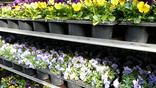 Das zweite Quartal hat der Gartenhandel nach vorläufigen Destatis-Zahlen mit einem Umsatzplus von 3,1 Prozent abgeschlossen.