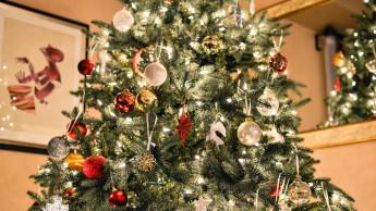 Jeder Vierte kauft den Christbaum im Baumarkt