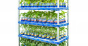 Pflanze ergänzt die blaue Wand