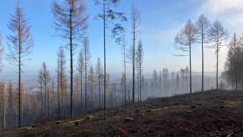 EK spendet an Baumpflanz-Projekt