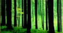 Streit um das Öko-Holz