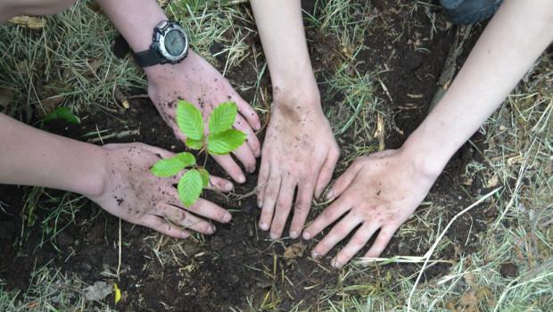 Das Unternehmen plant gemeinsame Baumpflanzaktionen mit der Initiative.