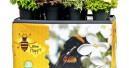 Diven, Models, Bienen und Beerchen