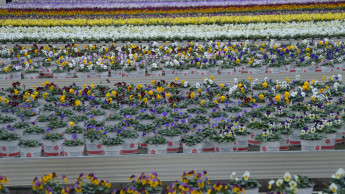 Gartenbau lehnt pauschale Verbote für Pflanzenschutz ab