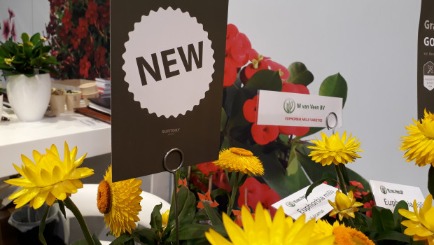Der grünen Branche wird die IPM Essen 2021 als Plattform für die Präsentation von Neuheiten fehlen.