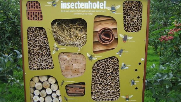Toom Baumarkt führt eine Aktionswoche rund um das Thema Artenvielfalt durch.