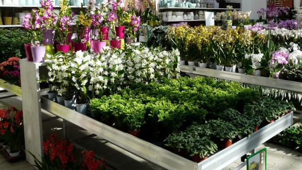 Der Gartenhandel lag den Destatis-Zahlen zufolge mit seinen Umsätzen im September über Vorjahr, im gesamten dritten Quartal jedoch darunter.