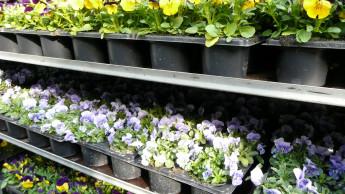 DUH fordert Mehrweg-Paletten für Pflanzen und Abgabe auf Einweg