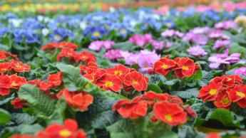 Blumen und Zierpflanzen überstehen den Sommer besser als gedacht