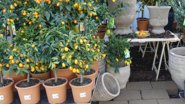 Der französische Gartenfachhandel hat seine Umsätze im Corona-Jahr 2020 trotz starker Schwankungen steigern können.