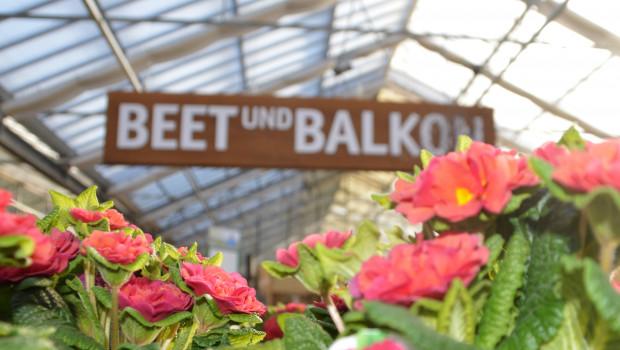 Das Segment Beet und Balkon hat sein Umsatzvolumen 2018 um 3 Prozent gesteigert.