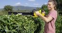 Hygiene- und Gartenprodukte stark nachgefragt