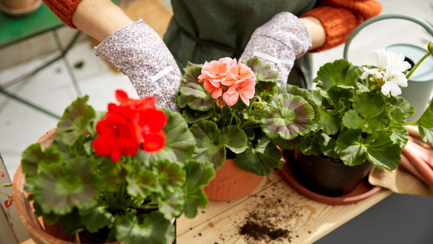 Kaufland fordert von seinen Lieferanten im Bereich Blumen und Pflanzen verbindliche Zertifizierungsstandards.