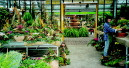 Erlebnisreiches Gartencenter: Mediterrane Anklänge in der Pfalz