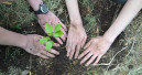 "Energizer und ""Plant-for-the-Planet"" kooperieren"