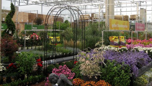 """Gar nicht so schlecht: Unter den von """"Mein schöner Garten"""" ermittelten 500 besten Gartencentern sind 280, die zu Baumärkten gehören."""