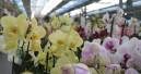 Pflanzenhandel kann den Umsatz 2020 laut Destatis lediglich halten