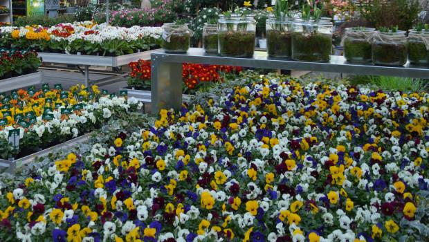 Für die Gartencenter war der April 2021 ein schwieriger Monat.