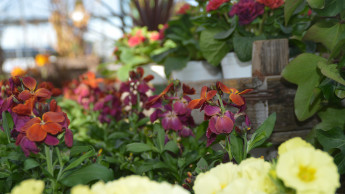 VDG startet Petition für die Öffnung der Gartenmärkte zum 1. März