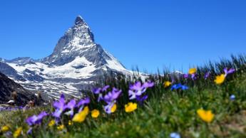 Durchweg positive Bau- und Gartenmarktzahlen in der Schweiz
