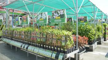 Baumärkte müssen Gartencenter in Sachsen und möglicherweise Bayern schließen