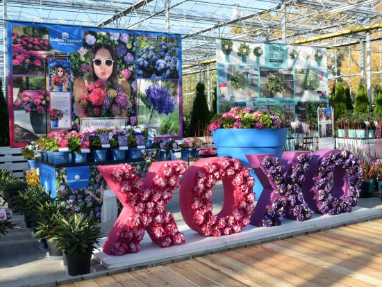 Die Hortensienmarke Endless Summer läuft und läuft. So wird sie aktuell in den Gartencentern präsentiert.