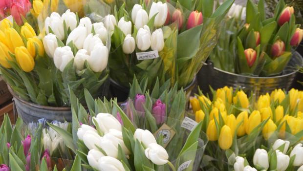 Tulpen nicht nur aus Amsterdam waren in der KW 8 bei Flora Holland besonders beliebt.