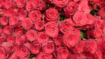 Münchener verschicken die meisten Sträuße am Valentinstag