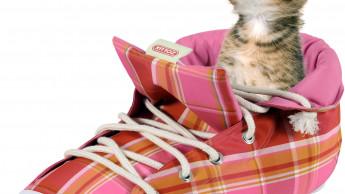 Ein Schuh für Katzen
