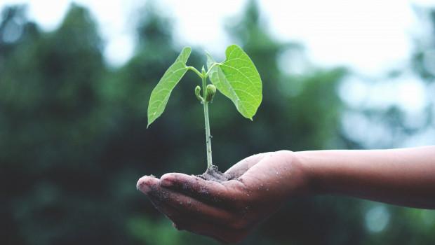 Die Befragten legen Wert auf Nachhaltigkeit, sowohl bei der Herstellung der Produkte, als auch bei dem verwendeten Material.