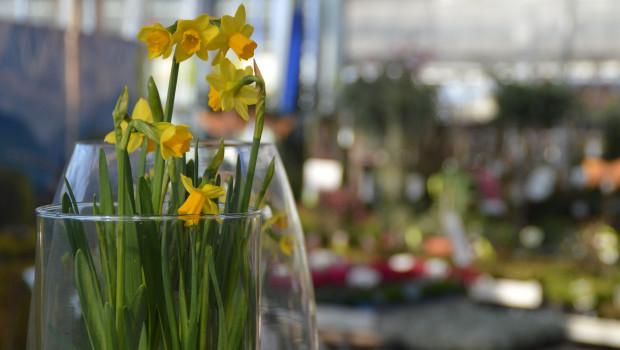 Der Markt für Blumen und Pflanzen ist von der Krise in besonderer Weise betroffen.