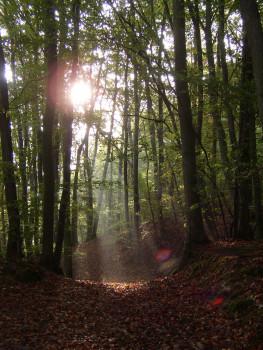 Waldschutz ist gleichzeitig Klima- und Umweltschutz: Toom Baumarkt führt deshalb wieder eine Pro Planet-Aktionswoche durch (Bild: Naturefund).
