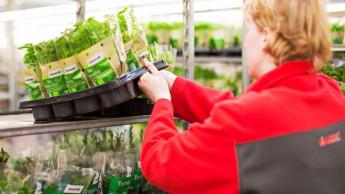 Toom will ab 2020 Mehrweg-Pflanzenpaletten testen