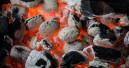 WWF fordert strengere Kontrollen bei Grillkohle