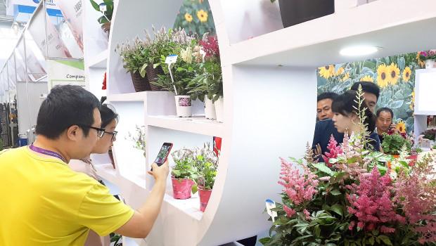 Ein nach wie vor stark steigendes Interesse der Chinesen am Gartenbau stellen die Veranstalter der Hortiflorexpo IPM fest.