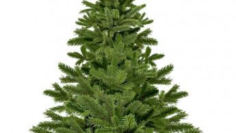Verband Natürlicher Weihnachtsbaum e. V. wurde gegründet