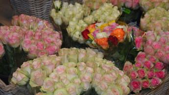 Trend zu mehr höherwertigen Blumen und Pflanzen gestoppt