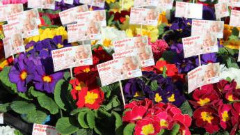 Schenken statt schreddern: Sagaflor-Partner spenden Blumen