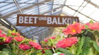 Gesamtmarkt für Blumen und Pflanzen wächst 2018 um ein Prozent