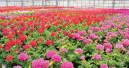 Blühende Großflächen