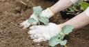 Branchenreport Garten zeigt positive Entwicklung
