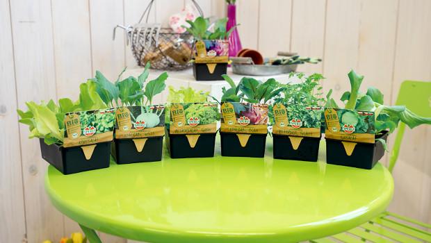 Sperli, Bio-Pflanzen