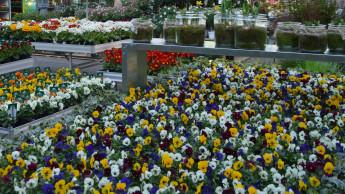 Gartenhandel verliert im kältesten April seit 40 Jahren an Umsatz