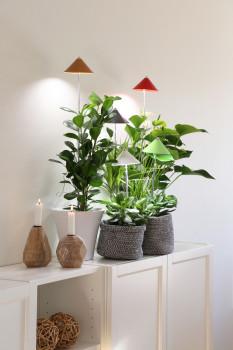 Venso EcoSolutions GmbH,  Pflanzenleuchten